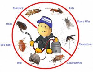 شركة مكافحة النمل الابيض بجازان                         300x233