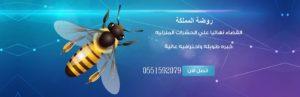 [object object] شركة مكافحة حشرات ومكافحة النمل الابيض بجازان                         300x97