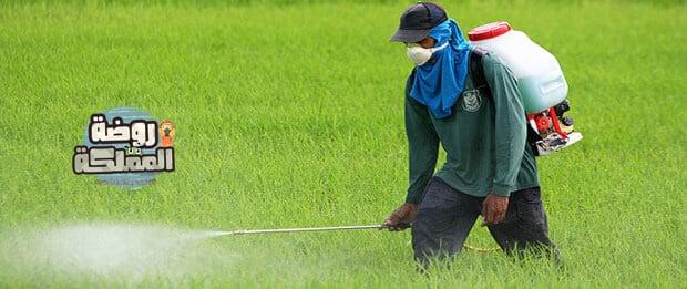 شركة رش مبيدات باحد رفيده
